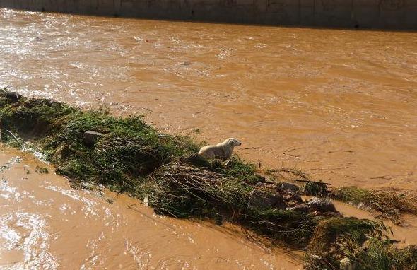 Beykoz'daki Sokak Hayvanları Sele Kapıldı