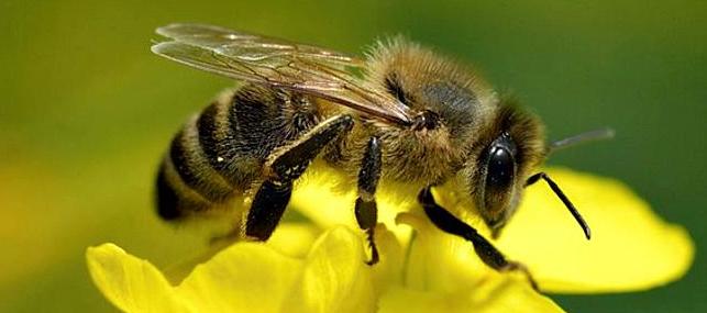Arı Dilinin Şifresini Çözme