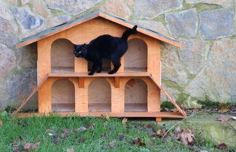 Kediler Kışın Evsiz Kalmayacak