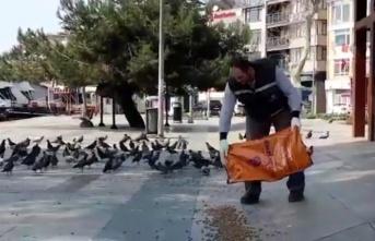 İBB Beykoz'da sokak hayvanlarına mama dağıttı