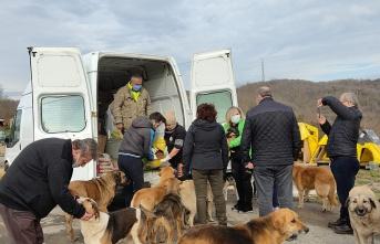 İYİ Parti Beykoz, sokak hayvanlarına mama dağıttı