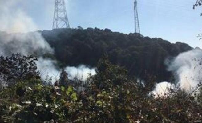 Beykoz'da Ormanı Kundakladılar