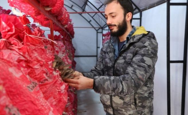 Mühendislik kariyerini yarıda bıraktı, Beykoz'da mantar üretimine başladı