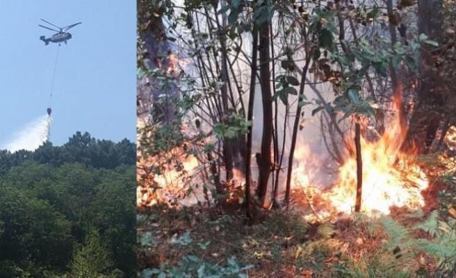 Beykoz'da ormanlık alanda yangın paniği