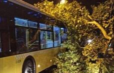Beykoz'da fırtına: Ağaç otobüsün üstüne düştü