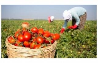 Beykozlu Çiftçilere Alım Garantili Üreticilik...