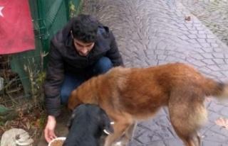 Beykoz Ülkü Ocakları sokak hayvanlarını besledi