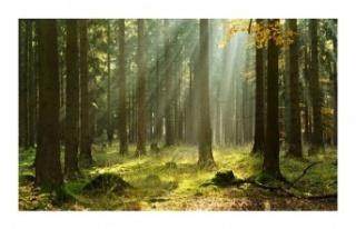 Beykoz'un ormanları koruma altına alındı