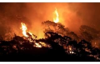 Beykoz'da yangınlar son bulmuyor! Poyrazköy'de...