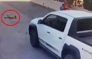 Beykoz'da vicdansız sürücü: Yerde yatan köpeği...