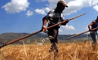 Beykoz'da 'Milli Tarım Yerli Tohum Deneme Ekimleri' Başlayacak