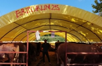 Beykoz Kurban Pazarı'nda Satışlar Yolunda
