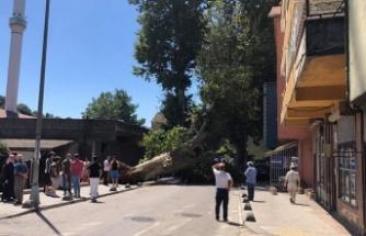 Tokatköy'de Dev Çınar Ağacı Evin Üzerine Devrildi