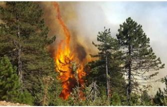 Beykoz Çavuşbaşı'nda Orman Yangını