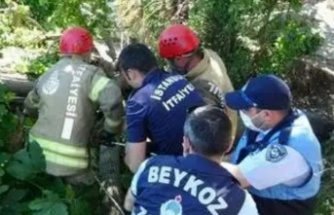 Beykoz'da yarım asırlık dut ağacı binanın üzerine devrildi!