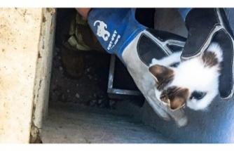 Beykoz'da mahsur kalan yavru kedi kurtarıldı