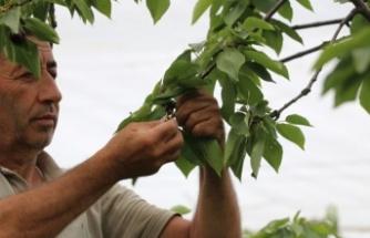 Beykoz'da dev tarım atağı