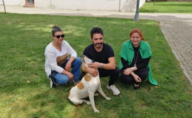 Beykoz Belediyesi'nden Minik Dostlarımıza Vefalı Davranış... Bir sanatçı da katıldı!
